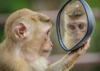 Thumb monkey 3512996 1920