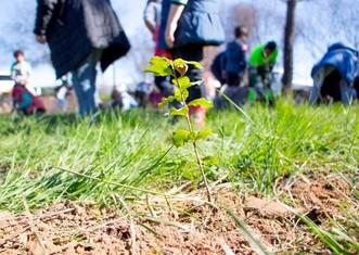 Thumb tree planting