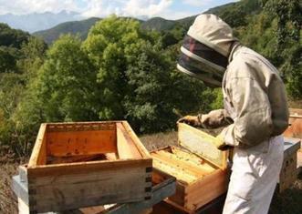 Thumb cantabrian beekeeper