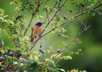 Thumb bird