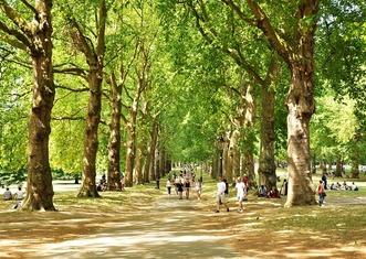 Thumb green park 2932220 960 720