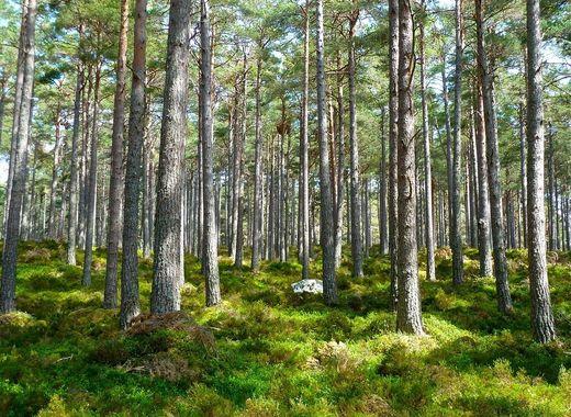 Medium forest 272595 960 720