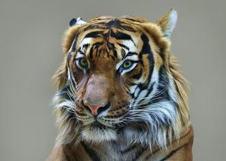 Thumb tiger 2252102 1280