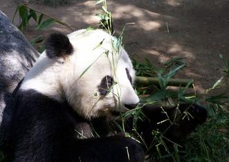 Thumb panda 662045 960 720