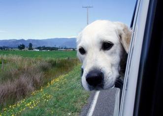 Thumb dog 2320741 1280