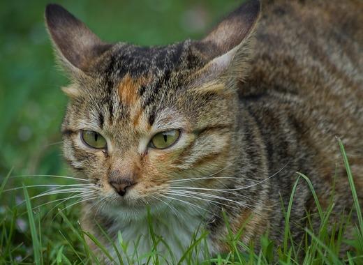 Medium cat 2867078 1280