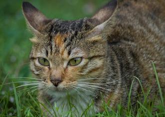 Thumb cat 2867078 1280