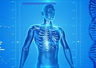 Thumb human skeleton 163715 960 720