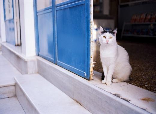 Medium cat 3439500 960 720