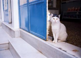 Thumb cat 3439500 960 720