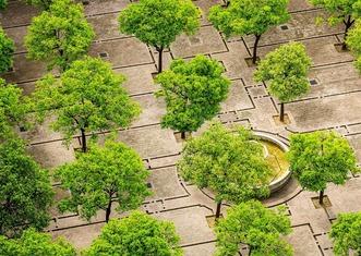Thumb tree 1817469 1280