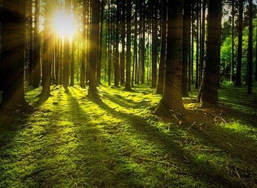 Medium forest