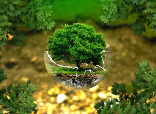 Medium tree