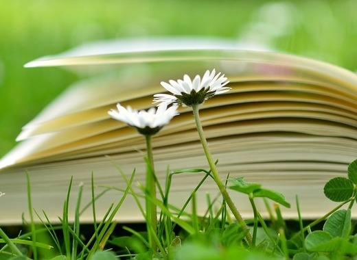 Medium book 2304389 960 720