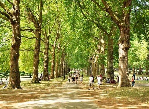 Medium green park 2932220  340