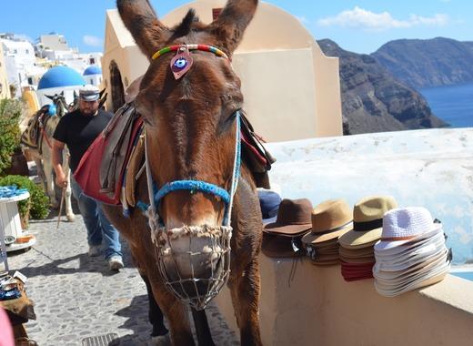 Medium donkey