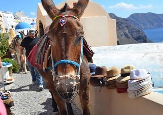Thumb donkey