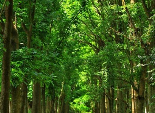 Medium woodland 2712790 960 720