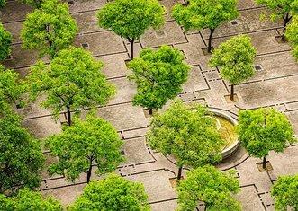 Thumb tree 1817469  340