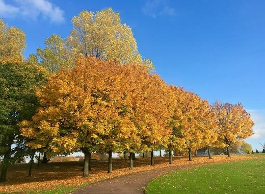 Medium autumn 1300904 1280