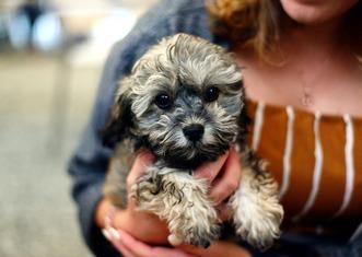 Thumb dog