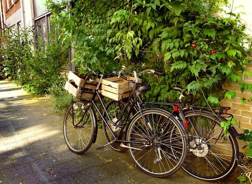 Medium bicycles 1525146 960 720